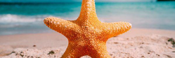 estrella_cliente_consultante_constelaciones_familiares_reconoce_tu_niño_interior_vanesa_hervas